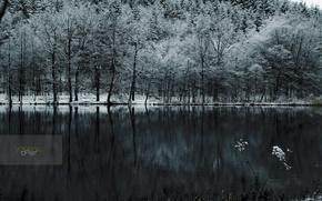 Обои холод, лес, снег, озеро