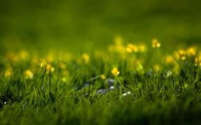 Картинка цветы, природа, травинка, травка, свежесть, зелень, лето, трава, травинки, весна