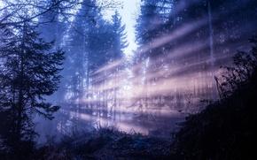 Картинка лес, лучи, деревья, природа, красота