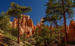 Обои сосны, деревья, худу, Юта, Брайс-Каньон, Национальный парк Брайс-Каньон, Utah, Bryce Canyon, Bryce Canyon National Park