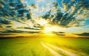 Обои дорога, поле, небо, солнце, облака, пейзаж, горизонт, луг, зелёный, тёплое, Nature scenic, field landscape