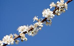 Картинка небо, ветка, весна, лепестки, сад