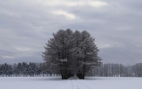 Картинка снег, деревья, путь, серое небо
