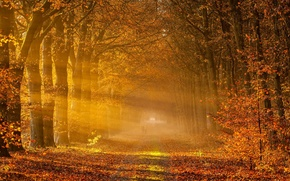 Картинка дорога, осень, деревья, пейзаж