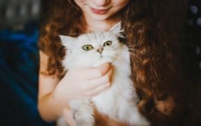 Обои девочка, белый, смотрит, кот
