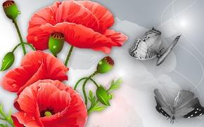 Картинка цветы, коллаж, бабочка, рисунок, маки, вектор