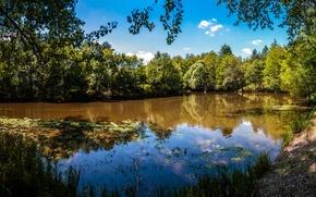 Картинка зелень, лес, лето, деревья, озеро, Франция, солнечно
