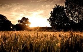 Картинка деревья, восход, Поле, солнца