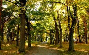 Картинка осень, листья, деревья, парк, Норвегия, дорожка, trees, park, autumn, leaves, Norway, path, fall, Осло, Oslo