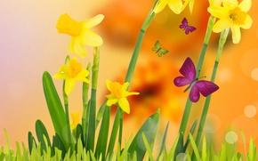Картинка трава, бабочки, цветы, весна, желтые, луг, цветение, yellow, flowers, нарциссы, spring, meadow, butterflies