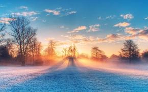 Картинка field, nature, sunset, sunlight, winter scenery