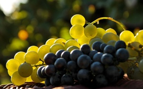 Обои свет, ягоды, виноград, гроздь, кисть