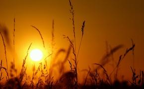 Картинка трава, солнце, макро, свет, закат, колоски, силуэт