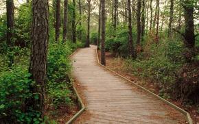 Картинка лес, деревья, дорожка, forest
