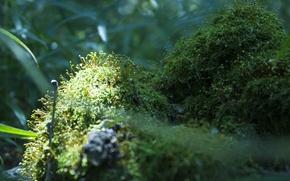 Картинка зелень, макро, природа, ростки, фон, мох