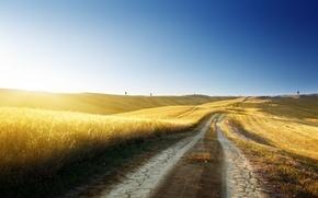 Картинка дорога, пшеница, лето, небо, трава, свобода, солнце, свет, деревья, следы, природа, синева, тепло, дерево, холмы, ...
