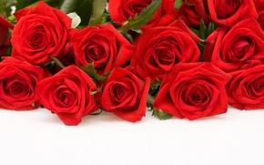 Обои цветы, белый фон, розы, красные