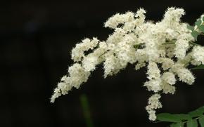 Картинка цветы, фон, ветка, насекомое