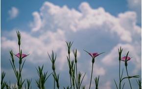 Картинка облака, макро, цветы, Растения, flowers, clouds, macro