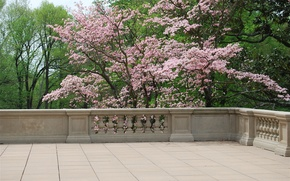 Картинка деревья, Весна, балкон, цветение, trees, nature, spring, balcony, flowering