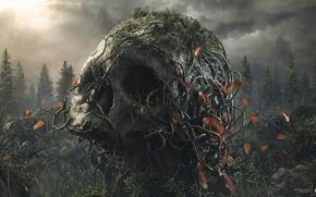Картинка лес, корни, вечер, Череп, лепестки, skull, desktopography