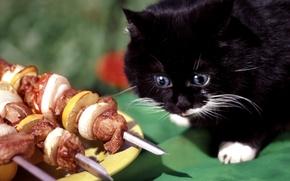 Обои кот, фарт, шашлык