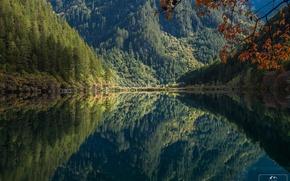 Картинка лес, деревья, горы, озеро, отражение, утро