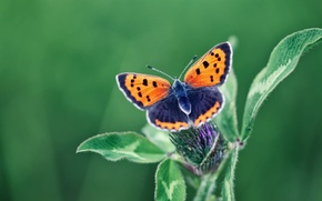 Картинка цветок, макро, бабочка, насекомое