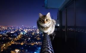 Обои огни, антиАкрофобия, перила, балкон, город, кот