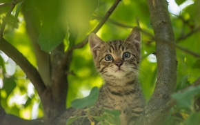 Обои взгляд, на дереве, котёнок