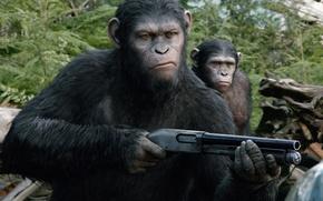 Картинка оружие, дробовик, Caesar, Революция, Dawn of the Planet of the Apes, Планета обезьян, цезарь