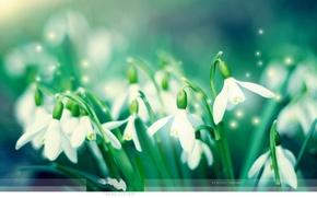 Обои зеленый, Весна, подснежники