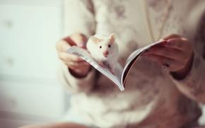 Обои крыса, книга, настроение
