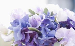 Картинка нежность, рози, цвети