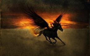 Картинка закат, крылья, Конь