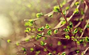 Обои зелень, листья, макро, ветки, весна, spring
