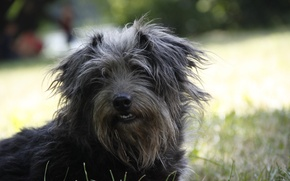 Картинка собаки, природа, фон, обои, собака, картинка