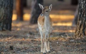 Картинка природа, олень, Bambi