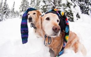 Картинка зима, собаки, шапки