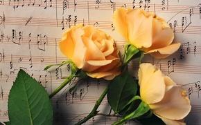 Обои листья, цветы, ноты, розы