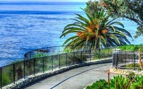 Картинка море, пальмы, спуск, горизонт, дорожка, перила, США, Laguna Beach