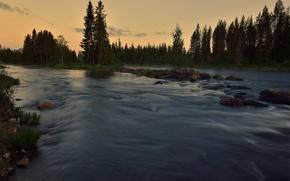 Картинка лес, лето, река, течение