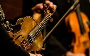 Обои скрипка, фон, музыка