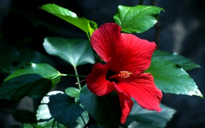Картинка цветок, красный, зелёный