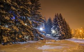 Картинка зима, снег, ночь, lights, огни, елка, night, winter, snow