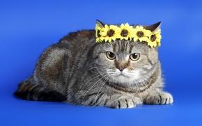 Картинка кошка, фон, венок
