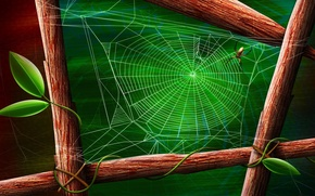 Обои лист, зеленый, паук, Паутина