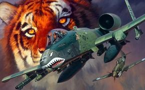 Картинка тигр, рисунок, арт, A-10, Curtiss, P-40, Warhawk, Fairchild, Thunderbolt II, Republic, американский истребитель, американский одноместный …