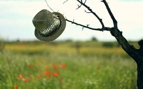 Картинка фон, дерево, шляпа