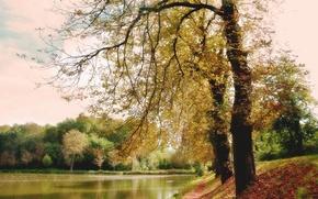 Картинка осень, лес, озеро, парк